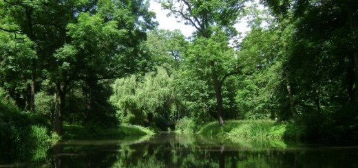 1-warsaw-poland-park-forest-trees-woods-lake-pond